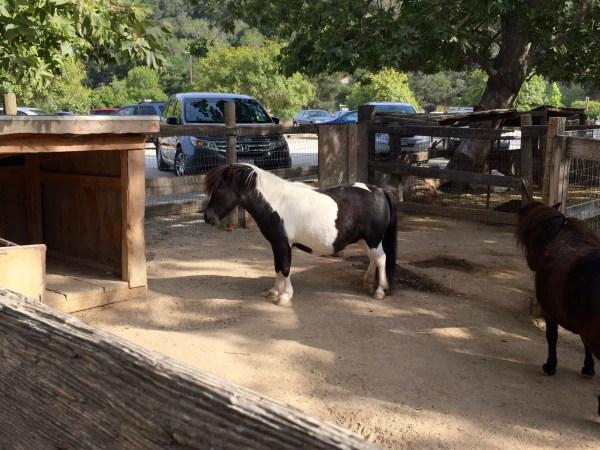 Everyone loves ponies!