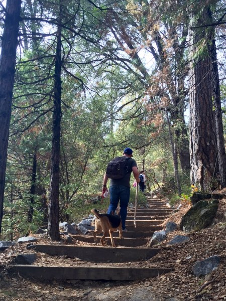Lewis Creek Trail is both dog-friendly and well-maintained.