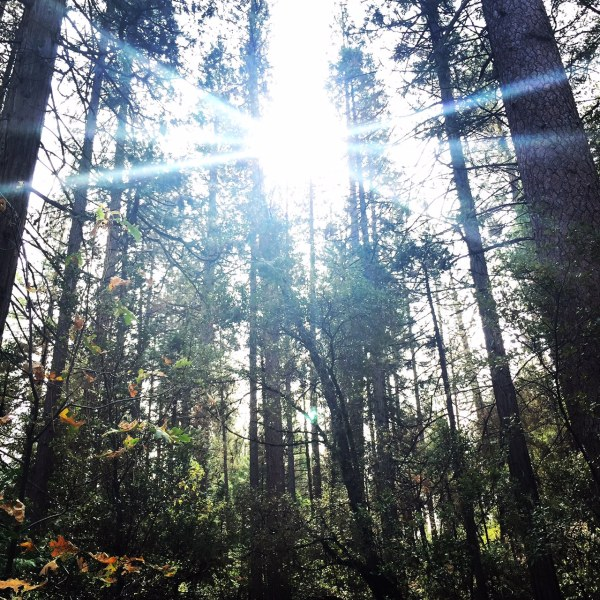 Sun through the trees at Lewis Creek Trail