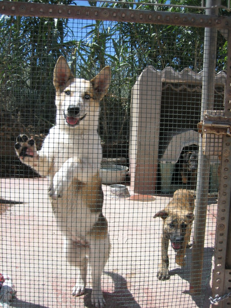Dogs in pet shelter