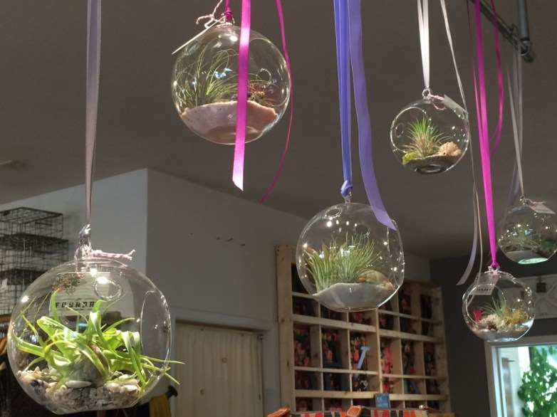 hanging plants from The Foundry