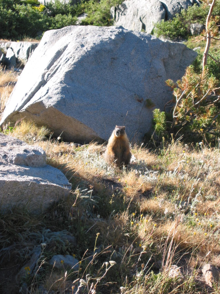 Apparently, this is a marmot.