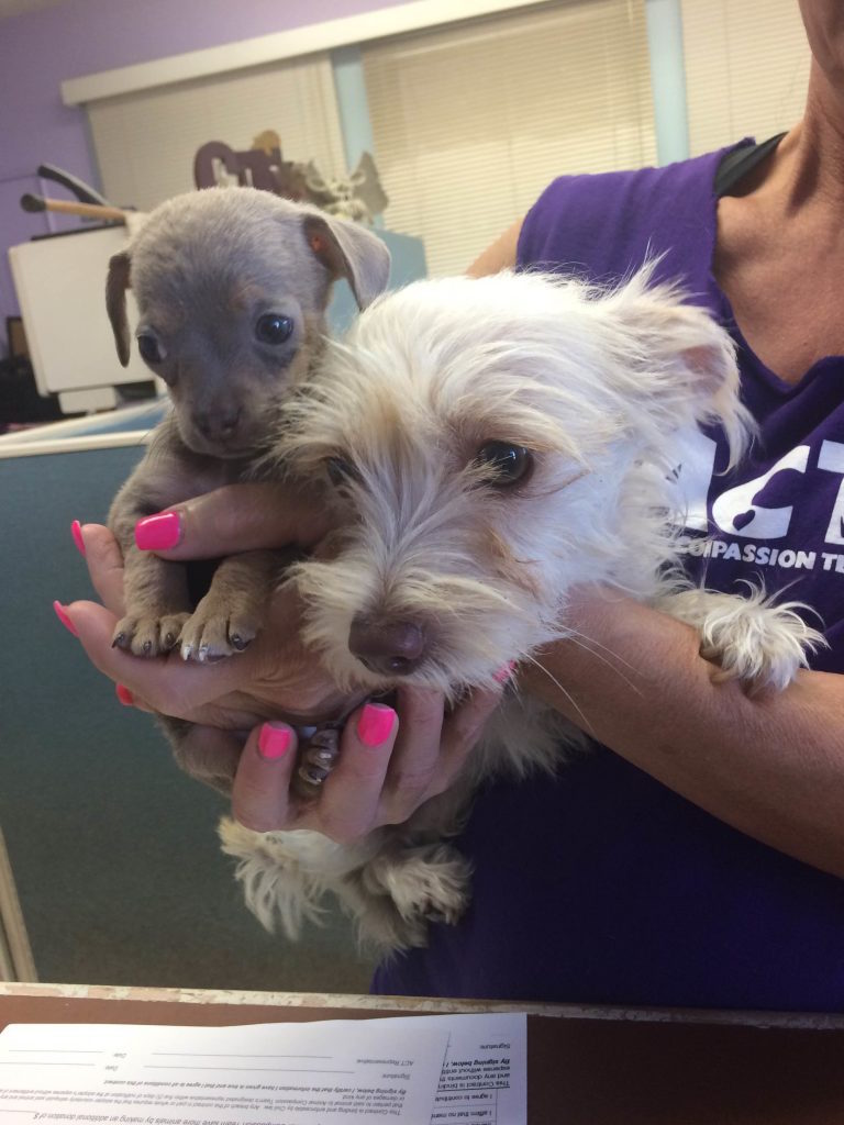 Our 2 new doggies from Animal Compassion Team of California