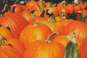 FresYes Pumpkin Patch Guide – 2016 Edition