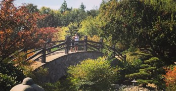 Shinzen Friendship Garden Fall Festival