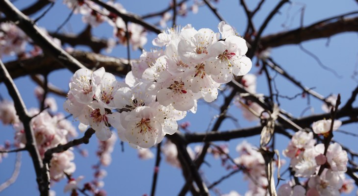 Enjoy the Fresno County Blossom Trail by Participating in These Community Events