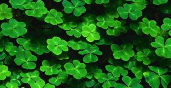 Here Are 8 Ways to Celebrate St. Patrick's Day in Fresno