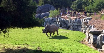 Fresno Chaffee Zoo Introduces Evenings on the Savannah Series