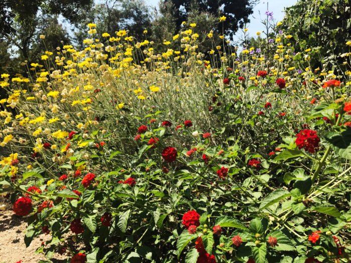 Clovis Botanical Garden