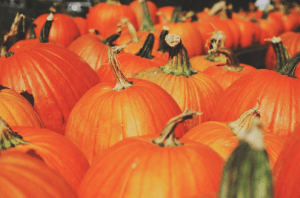 five pumpkin patches