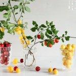 Kriecherl Rezepte – Mirabellen Inspirationen
