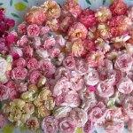 Rosen trocknen für Tee, Salz & Zucker