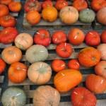 Kürbis- und Gemüse-Shopping in Niederösterreich – geliebter Herbst – kleine Kürbiskunde