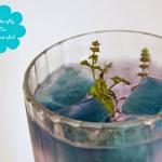 Blue Butterfly Icetea und blaue Eiswürfel – Blue Pea Tee