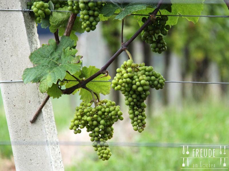 Weinurlaub-Unterlamm-38