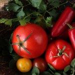 Shahi Paneer – Paneer in Tomatensauce – vegetarisch
