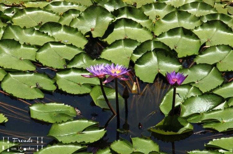 Lotusbluete-06
