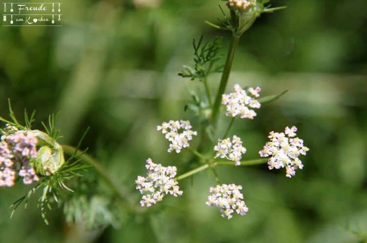 Blumen - Toplitzsee - Gössl - Ausseer Land - Freude am Kochen - Reisebericht