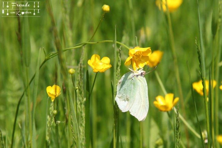 Schmetterling - Blüten - Blaa Alm - Ausseer Land - Freude am Kochen - Reisebericht