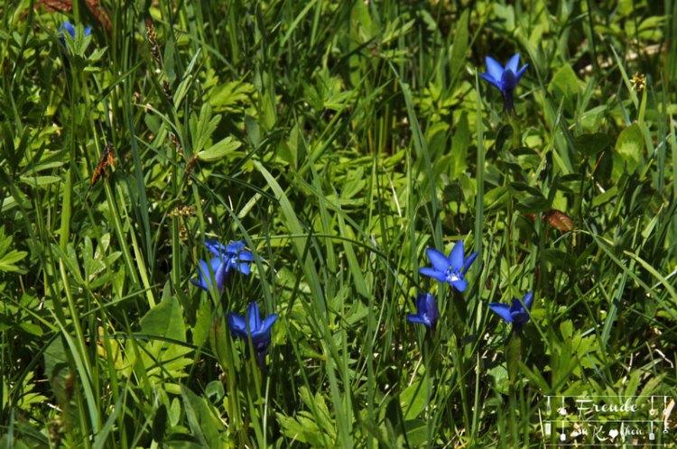 Blüten - Blaa Alm - Ausseer Land - Freude am Kochen - Reisebericht