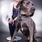 hund-tier-fotografie-oberasbach