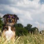 tier-hunde-fotografie-fuerth