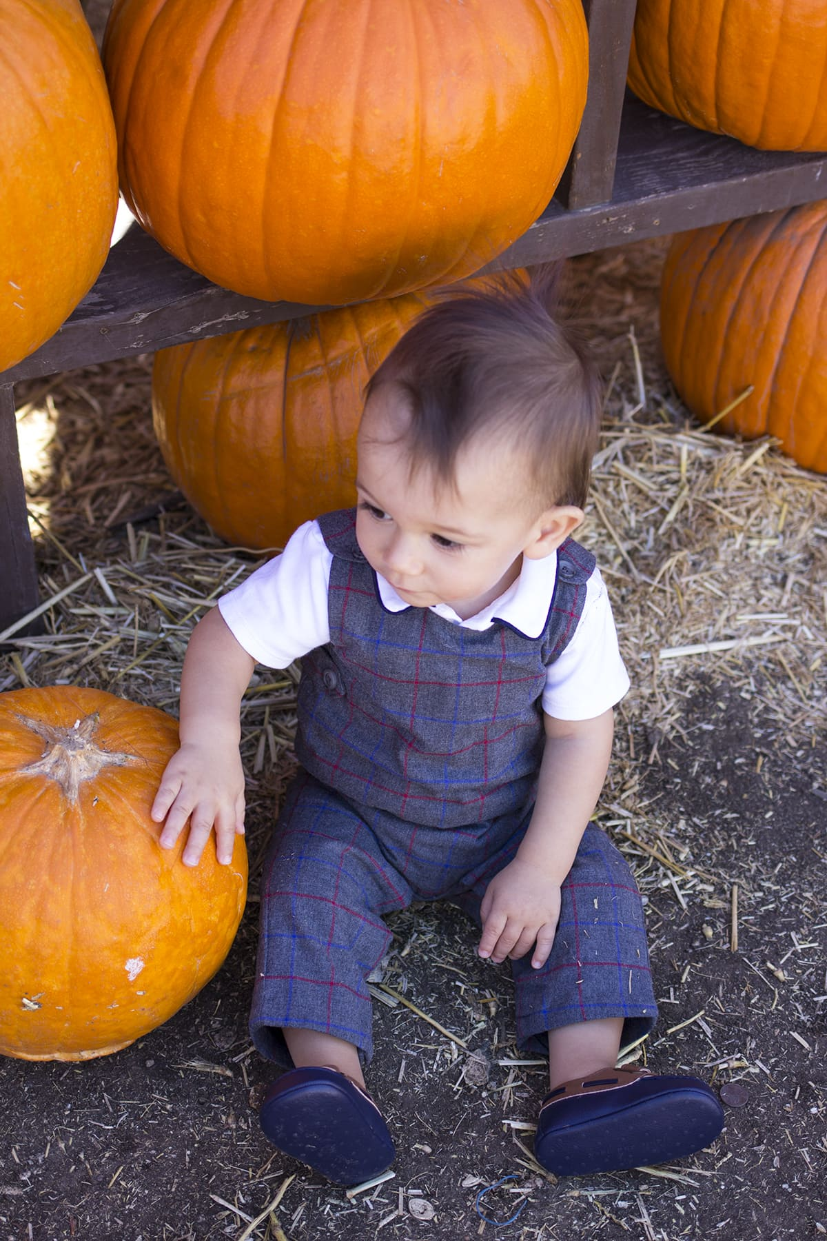 pumpkin patch family holiday traditions