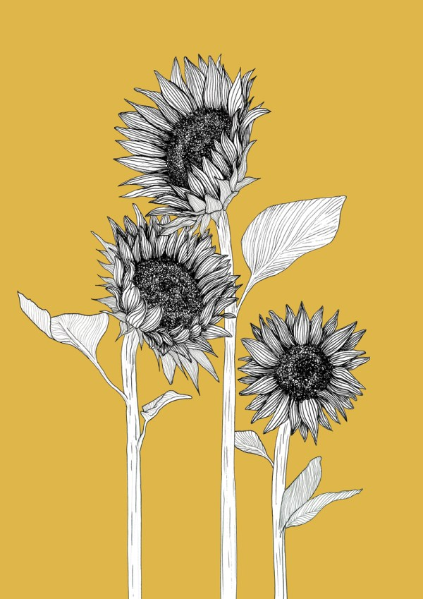 Sunflower Lovers (Various Colours)