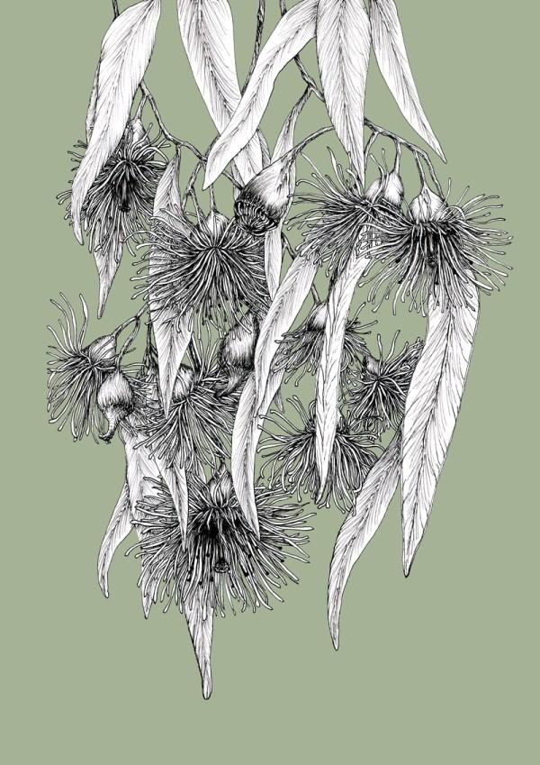 The Flowering Gum
