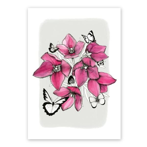 Boronias & Butterflies
