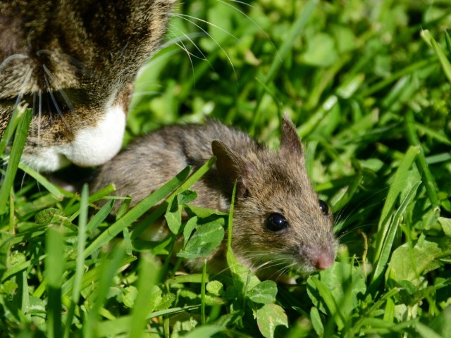 Cat and Mouse