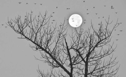 Full Moon, photo (c) David Foster