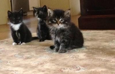CHAI, CALI, and VINNIE