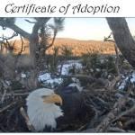 Ealge Adoption Product Image
