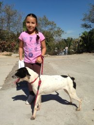 Oreo goes out for a walk with a young volunteer