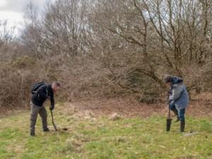 Planting Rowan Trees