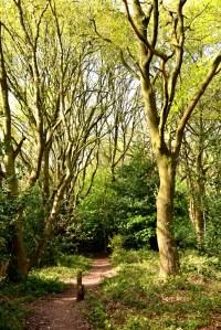Sunlit Path