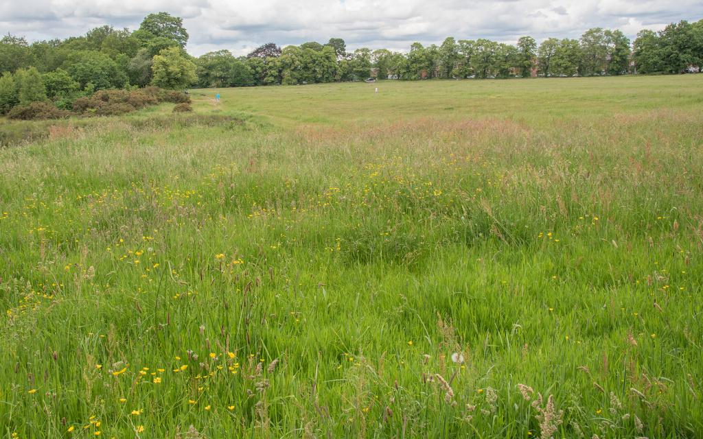 Glorious Grassland
