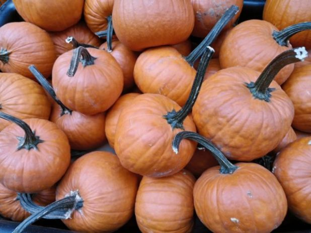 Ideas para capturar las fotos más terroríficas este Halloween