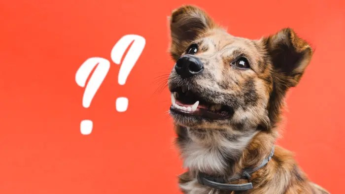 cane perplesso sulla scelta del frisbee