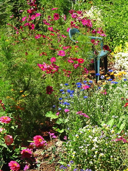 the swimming pool garden in august