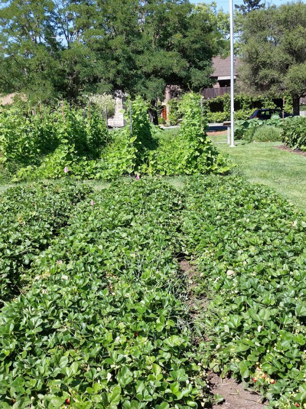 The French Laundry Garden, Yountville