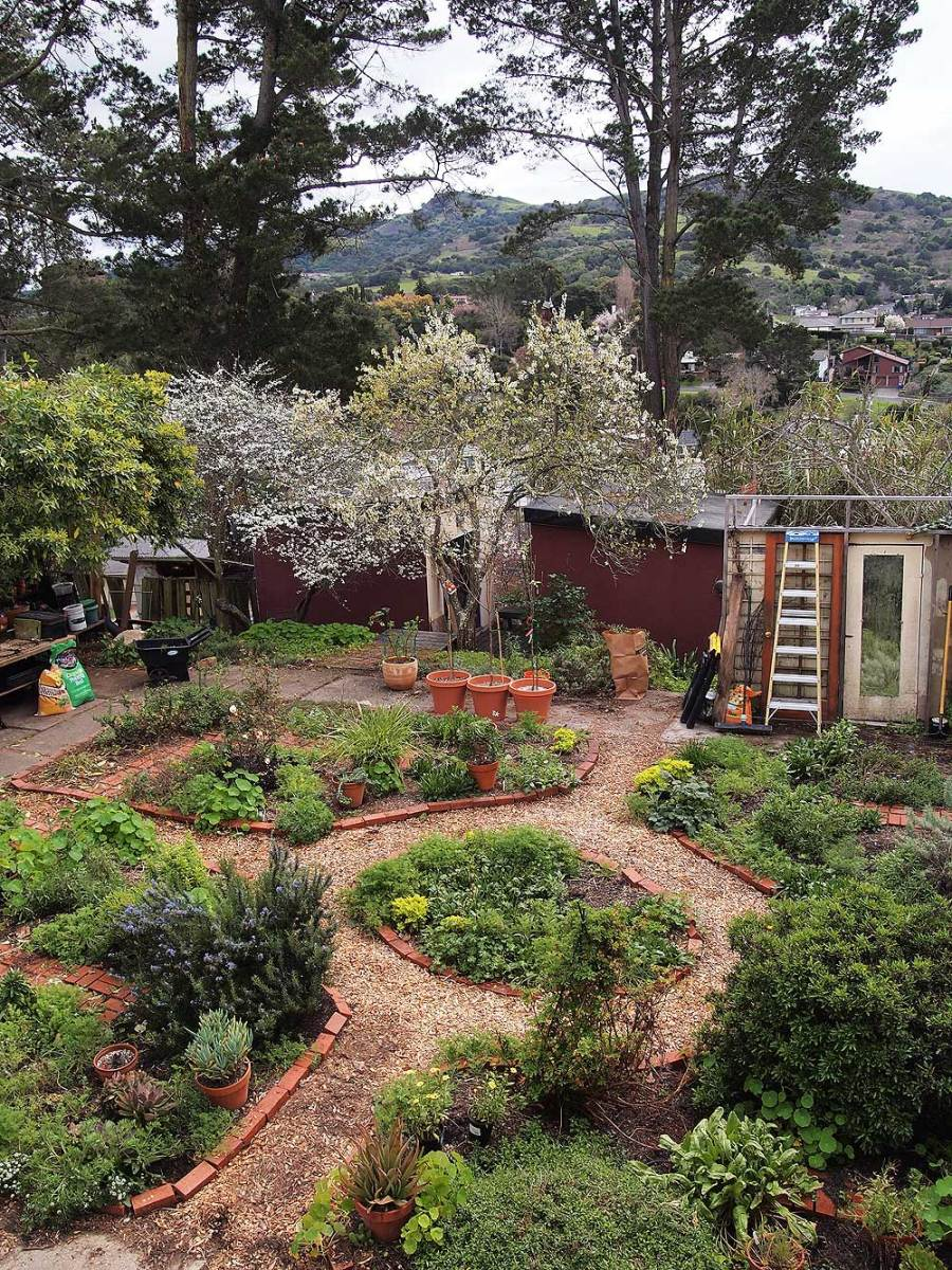 The garden, March 4, 2017.