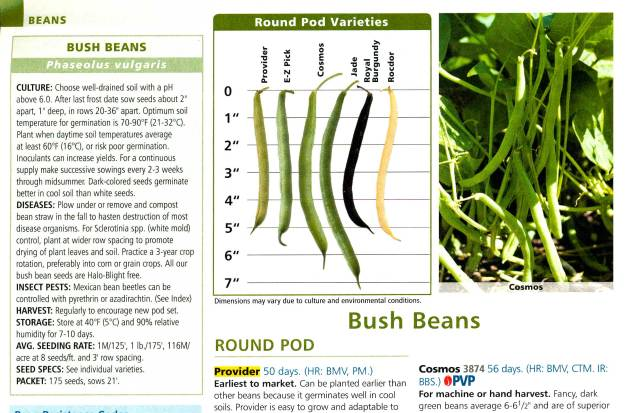 Johnnys Selected Seeds, excerpt from section on bush beans.