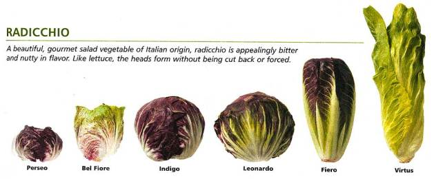Johnny's Selected Seeds, radicchio varieties comparison.