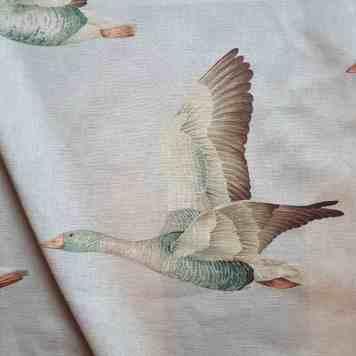 Geese San S