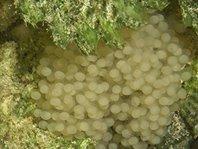 detalle de los huevos
