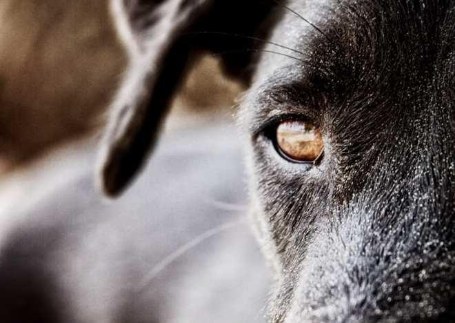 Wenn Frau Frogg telefoniert, begegnet sie Tieren die ihr nicht ganz geheuer sind. (Quelle: mixology.eu)