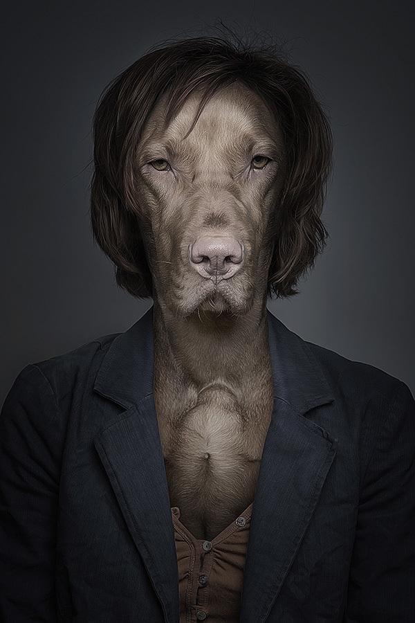 underdogs 2 Perro y gatos vestidos como humanos por Sebastian Magnani