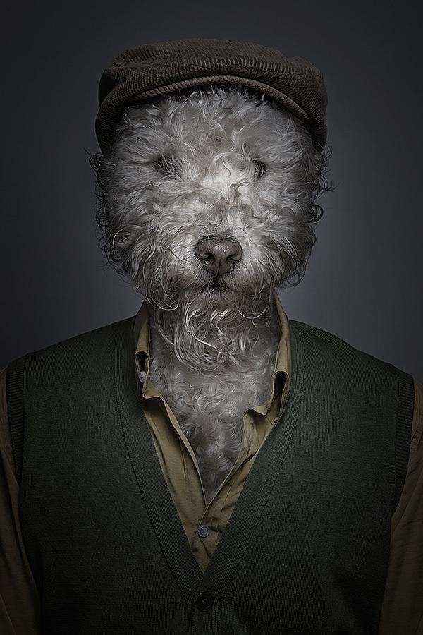 underdogs 3 Perro y gatos vestidos como humanos por Sebastian Magnani